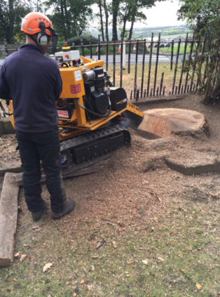 Tree stump grinding machine operated by our specialist stump grinding service tree surgeon